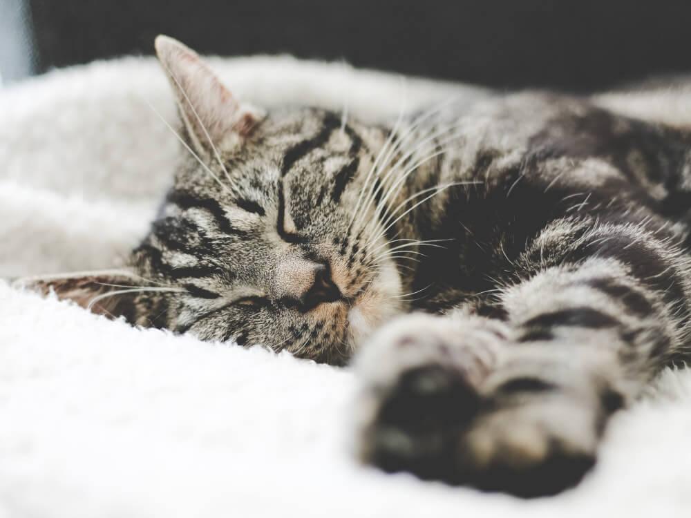 why do cats sleep so much - 2