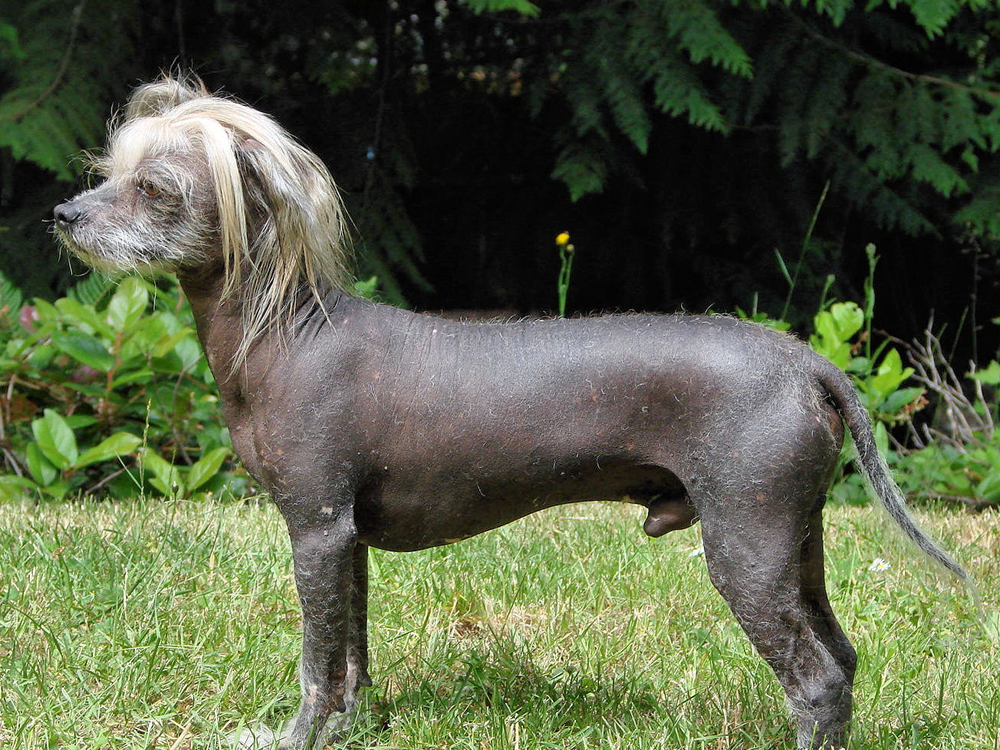 what is the ugliest breed of dog 10