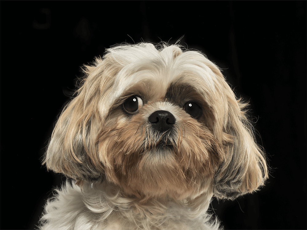 conjunctivitis in dogs 2