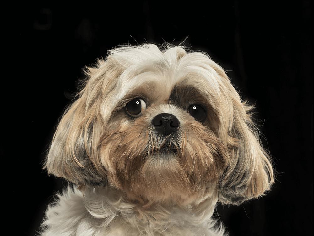 conjunctivitis in dogs 2