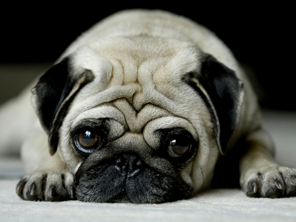 what is the ugliest breed of dog 8