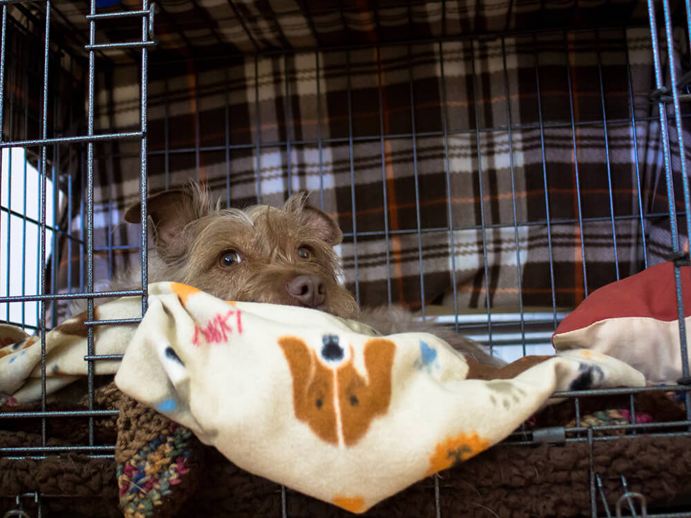 Choosing A Dog Crate: What Should You Look For?