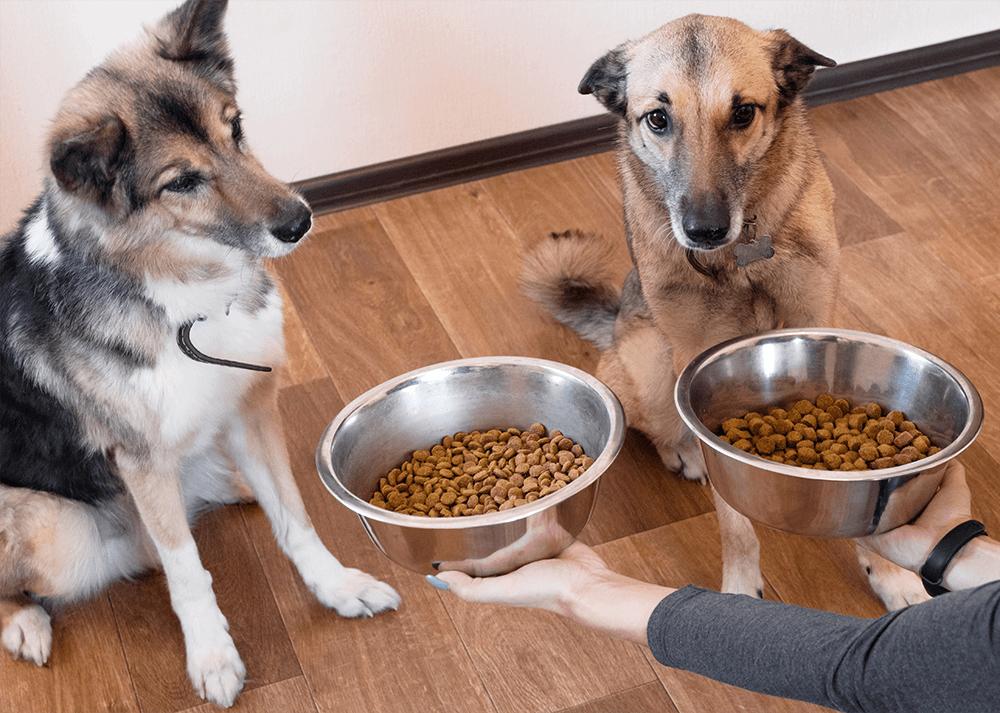dry-dog-food