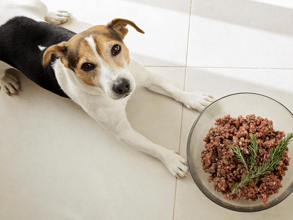 homemade-dog-food
