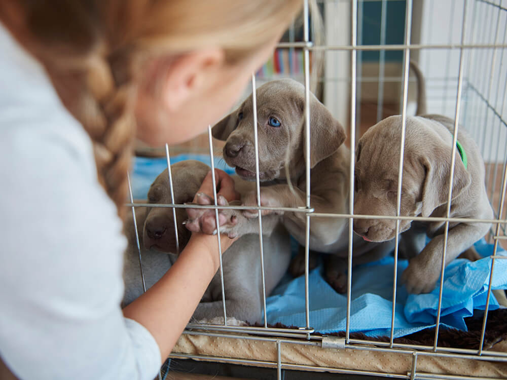 make-your-puppy-like-his-crate