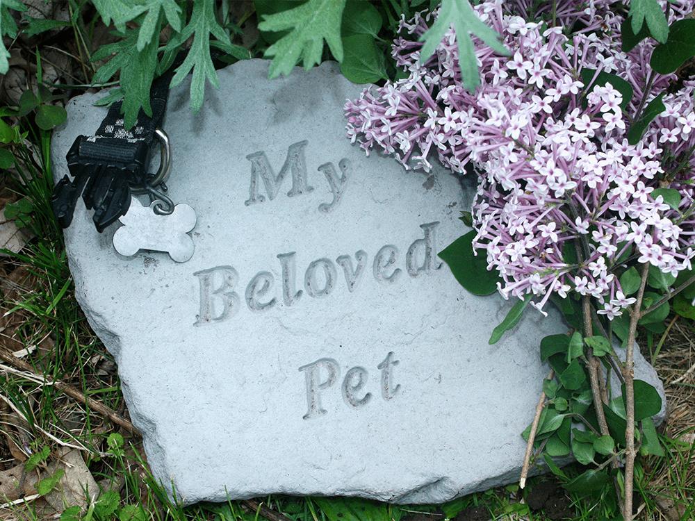 pet-cremated