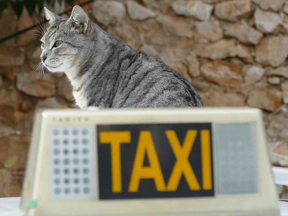 pet-taxi-services