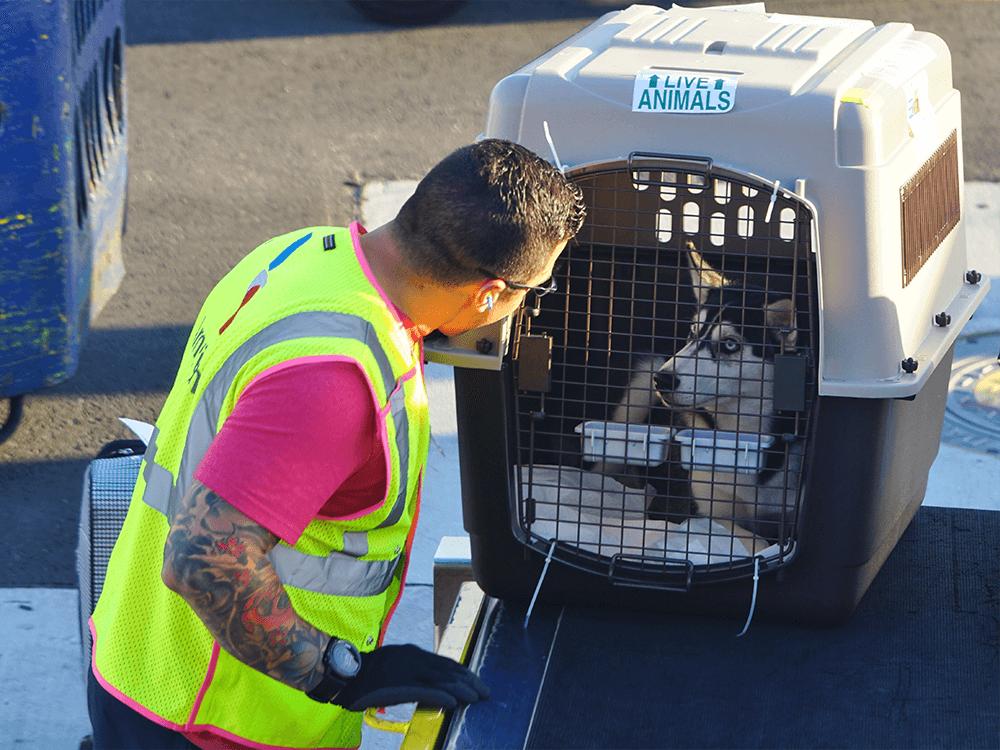 pet-transport-company