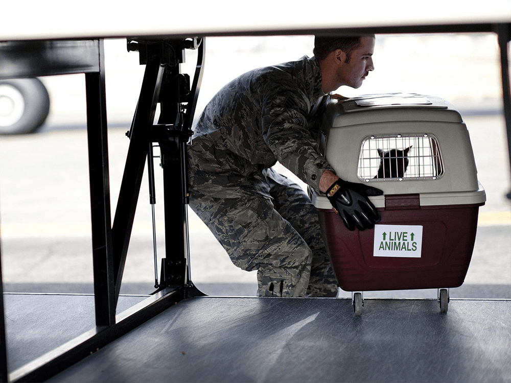 pet-transported-by-air