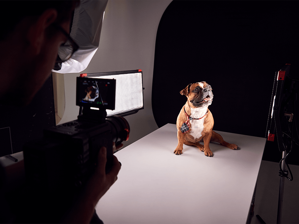 proffesional-dog-photographer