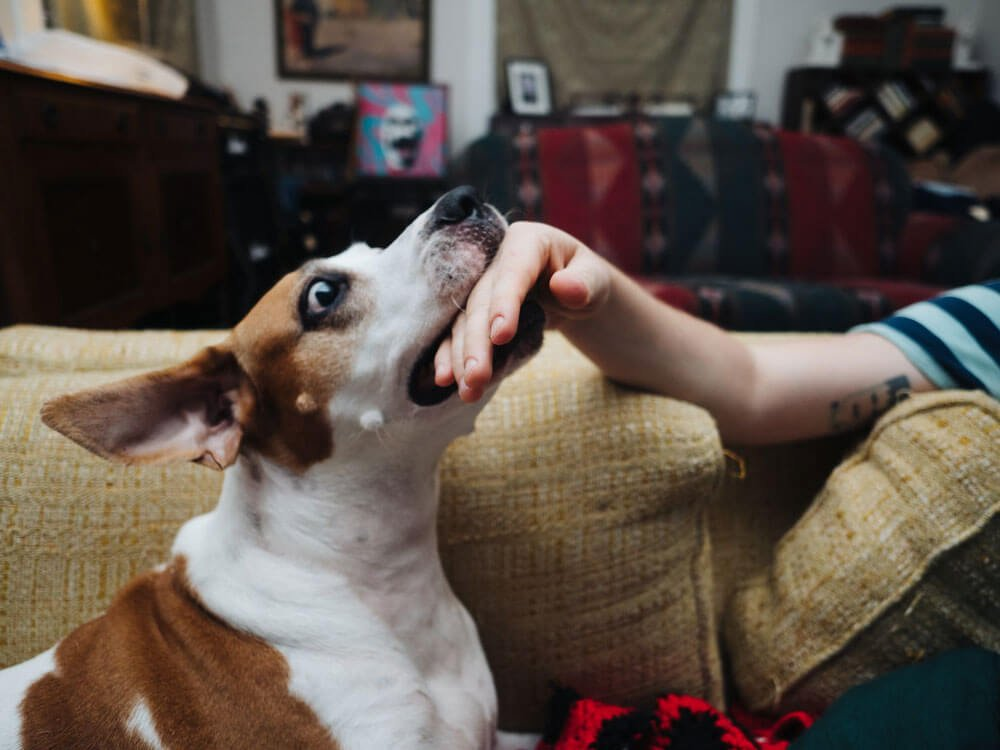 how to stop a dog from biting