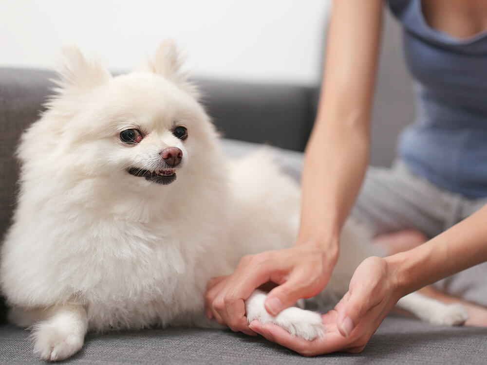 dog health check main
