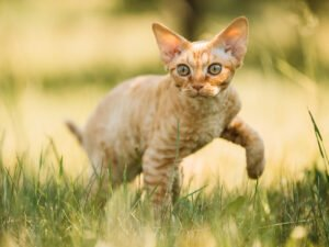 10 Most Popular Cat Breeds (2021)