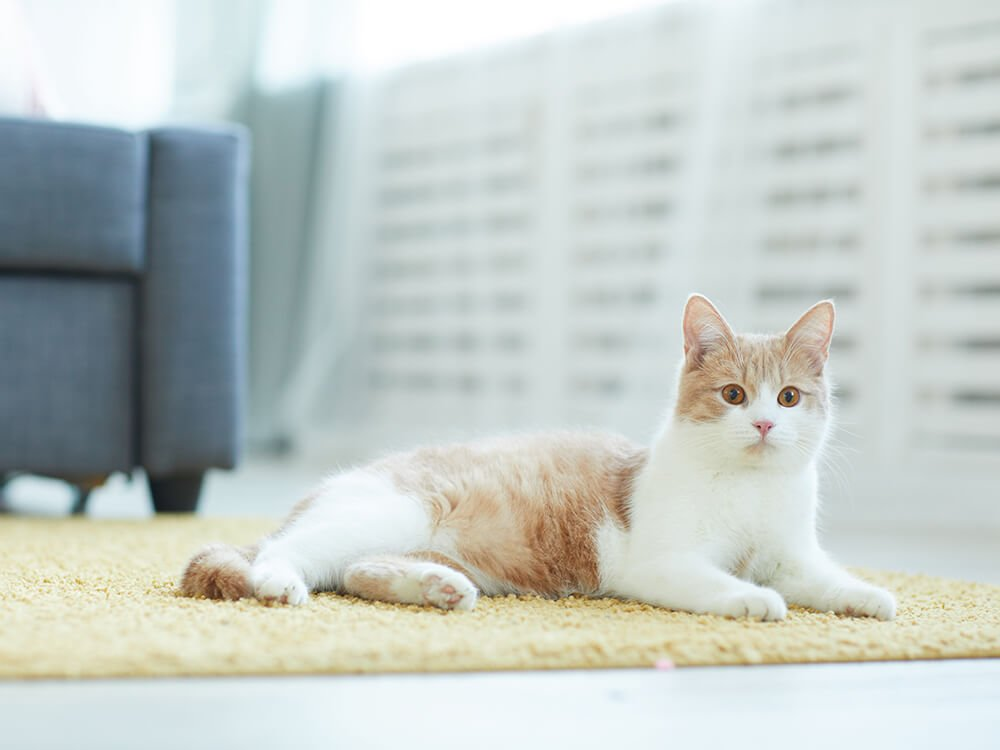 How To Rent A House with Pets -1