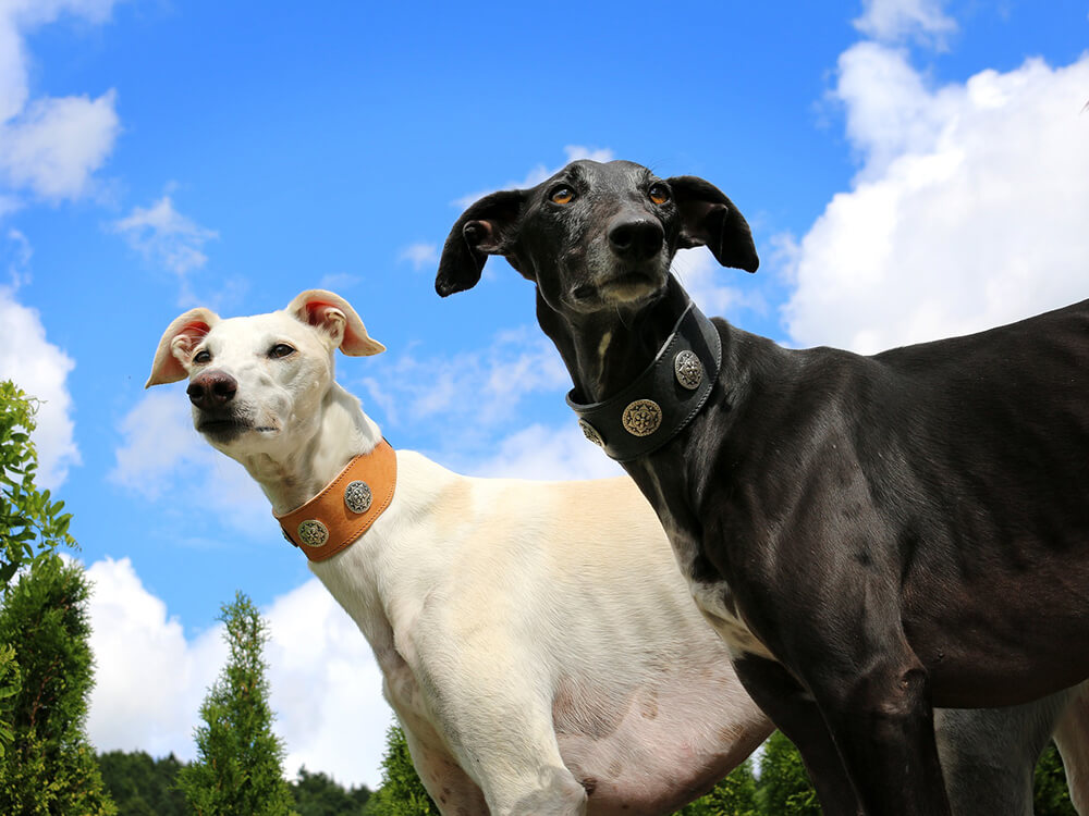 what dogs are sighthounds
