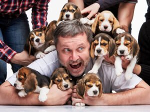 The Pros and Cons of Owning a Beagle
