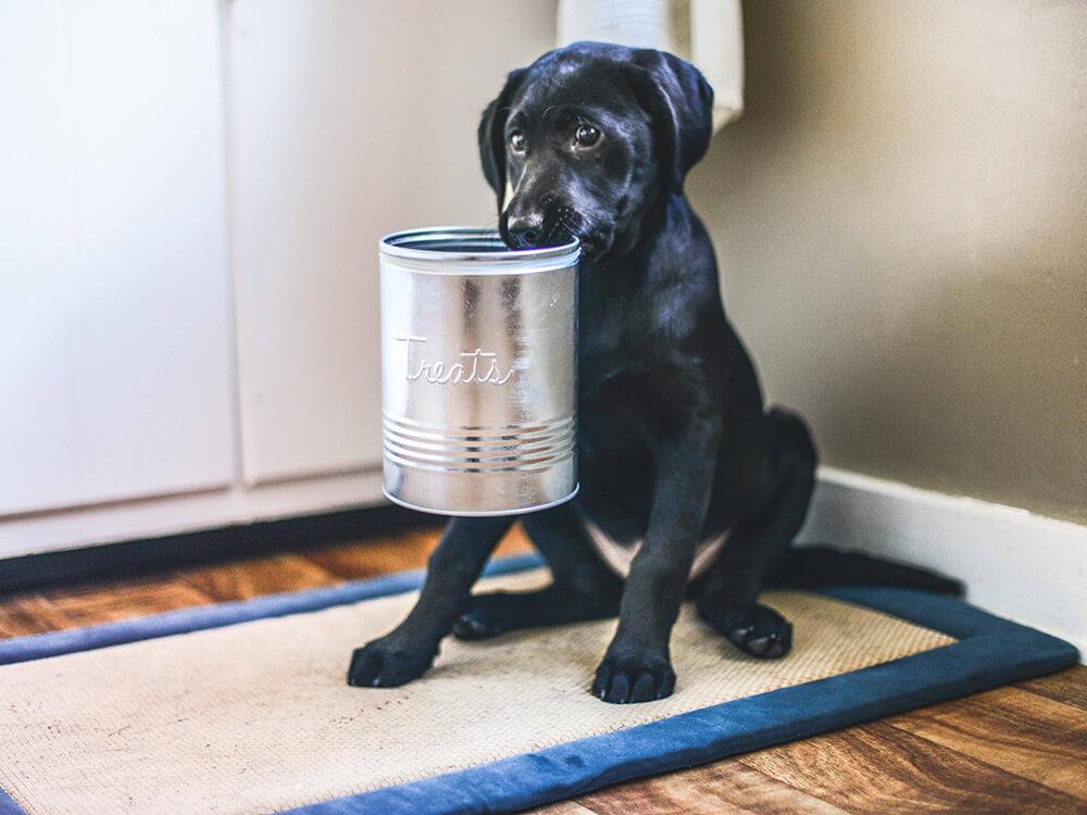 can dogs eat salt