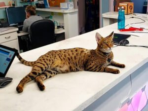 A Quirky Clinic filled with Video Games and Therapy Cats
