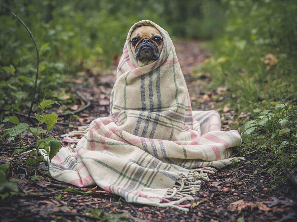 essential oils safe for dogs 4