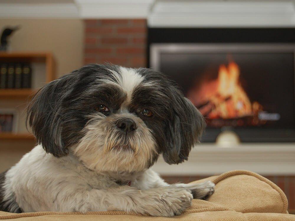 essential oils safe for dogs 5