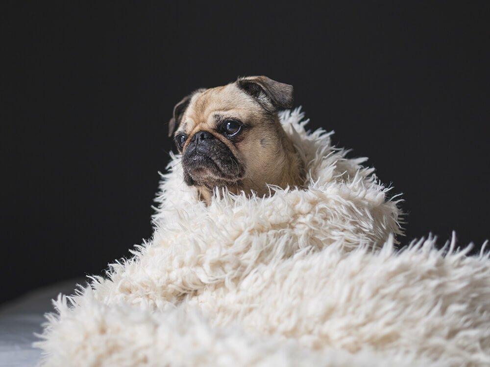 essential oils safe for dogs 6