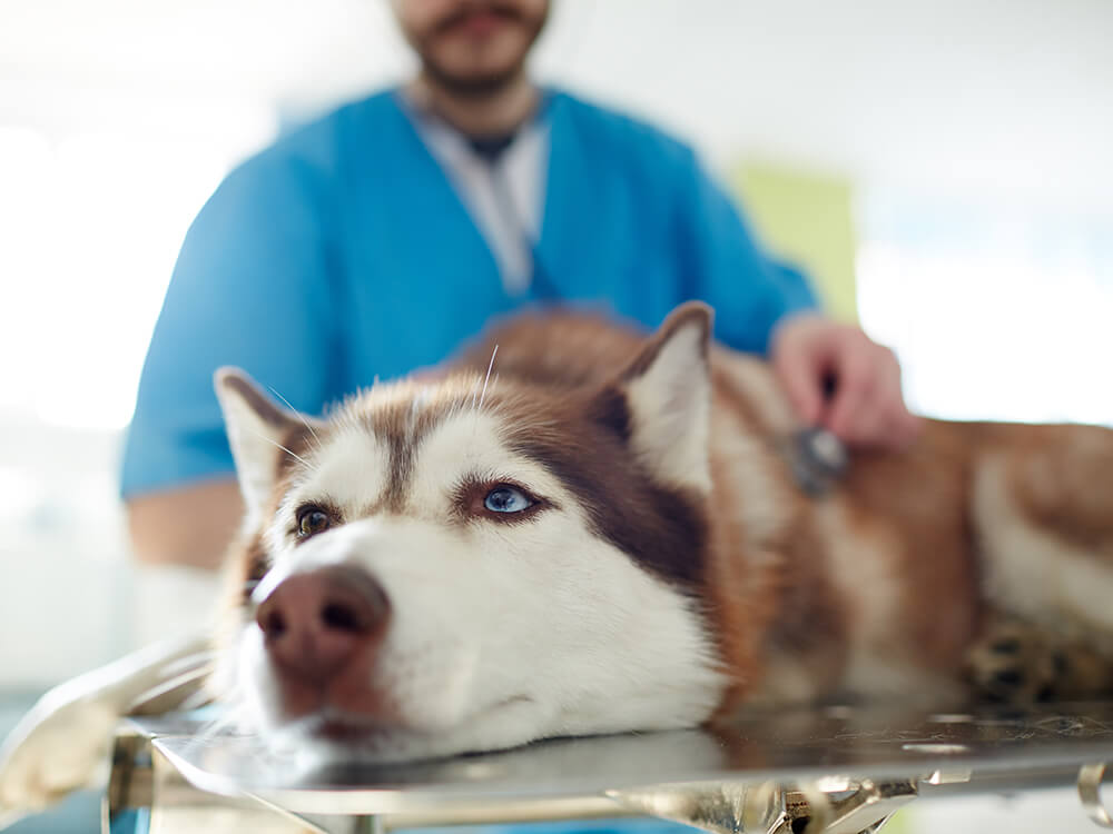 salt poisoning in dogs