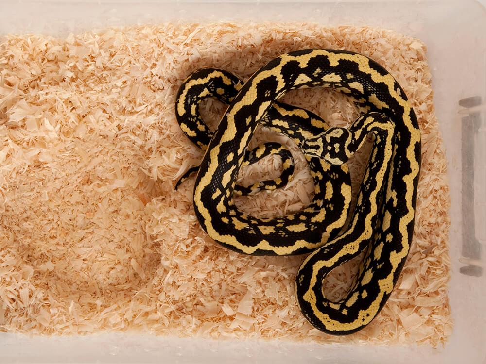 snake hibernation 1