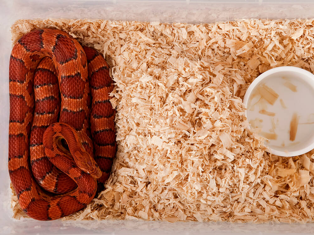 snake hibernation 2