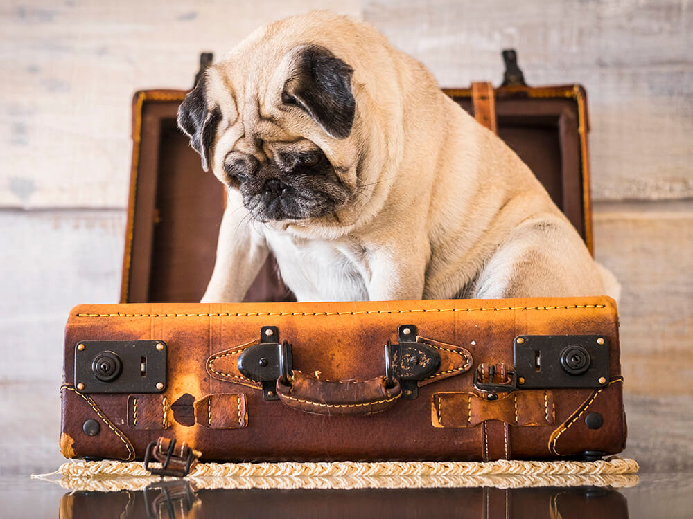 travel with pet after brexit