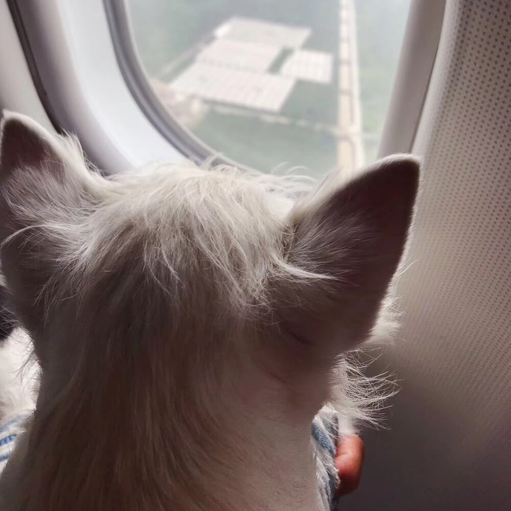 travelling with pets after brexit from the eu to gb