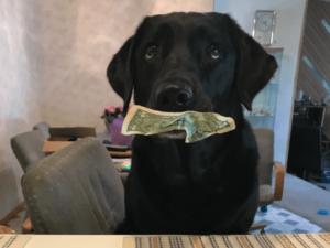 Sneaky Dog Embezzles Money from Her Family to Buy Treats