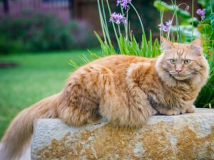 The 20 Most-Loved Fluffy Cat Breeds