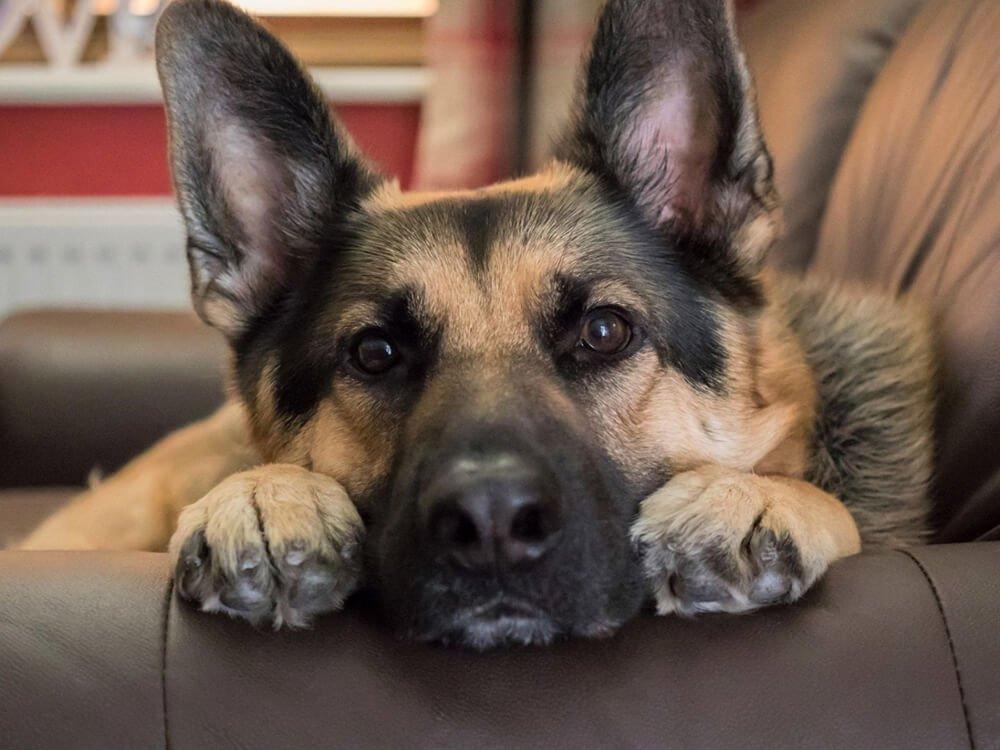 abnormal dog behaviour 1