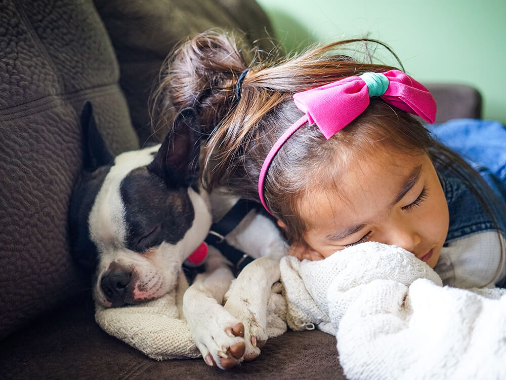 are boston terriers good pets 4
