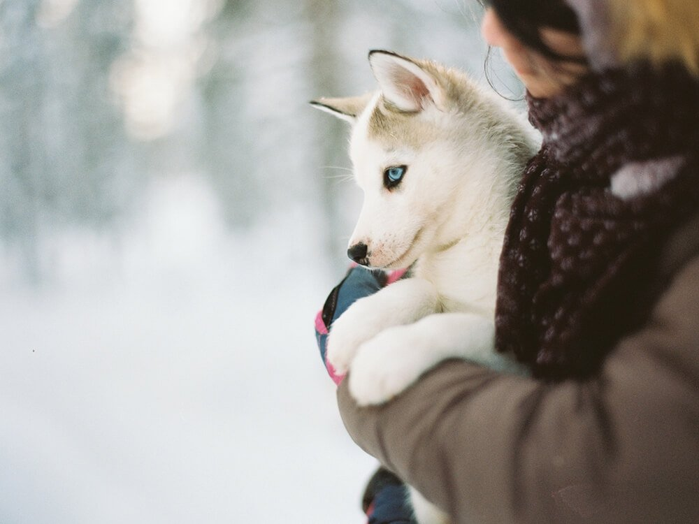 dogs with blue eyes 4