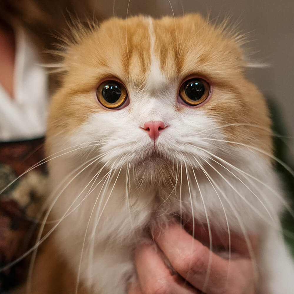 heart murmur in cats 5