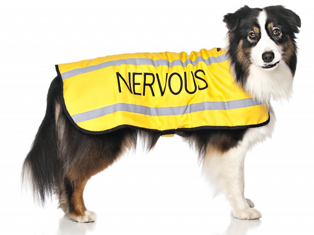 dog awareness and safety coat