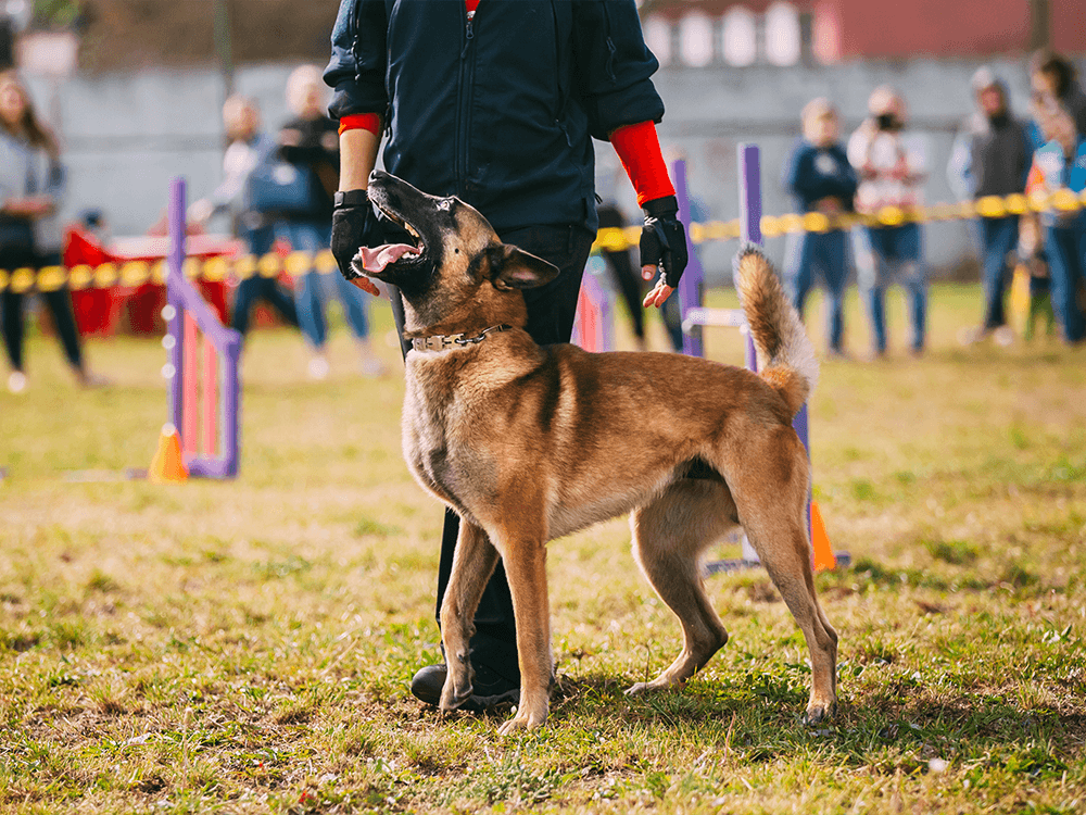 How to choose a reputable dog trainer