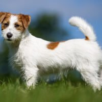 10 Cheapest Dog Breeds That Make the Best Family Pets (2021)