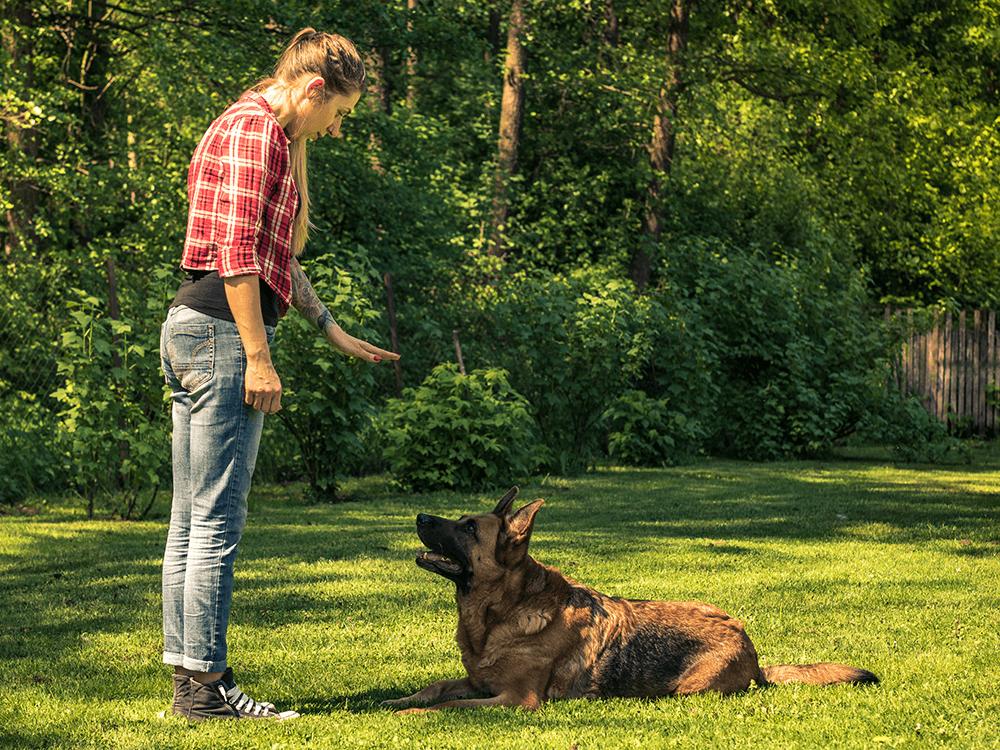 One-on-One Dog Training