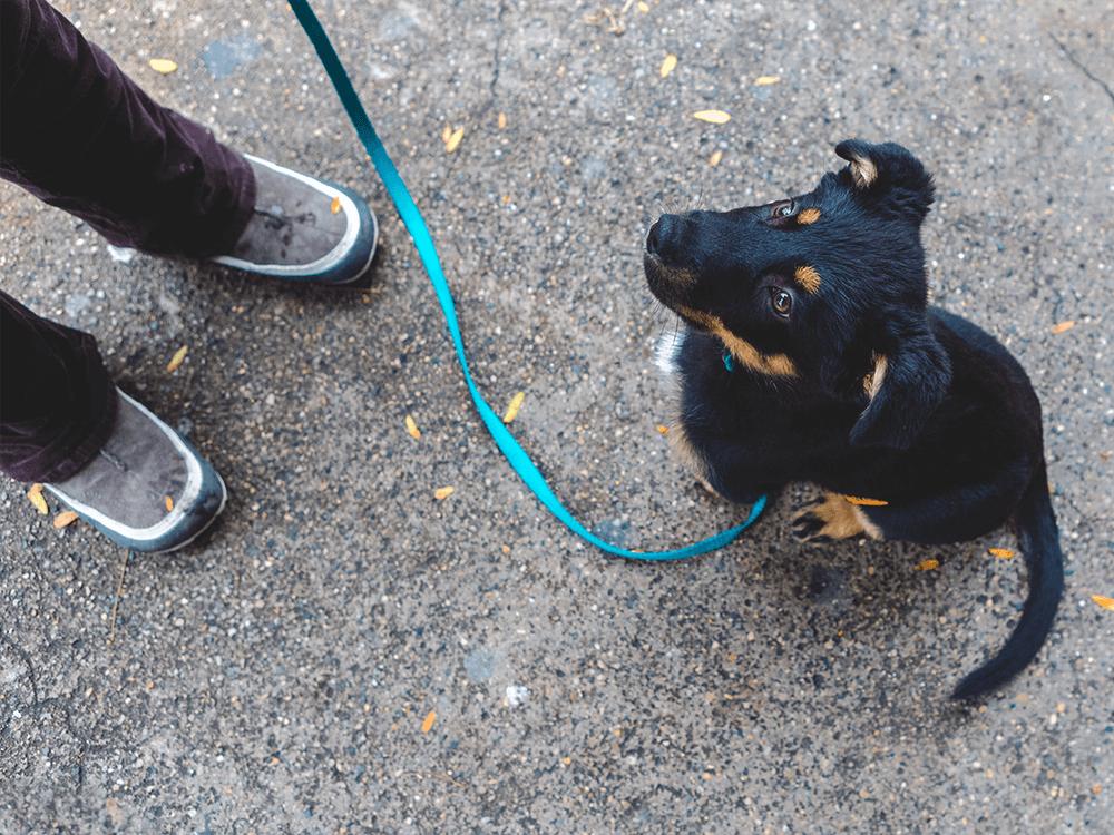 Puppy Socialisation Classes