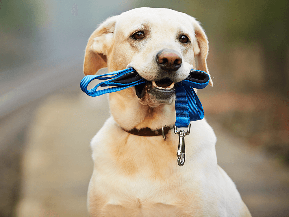 What should you bring during dog trainingpuppy class
