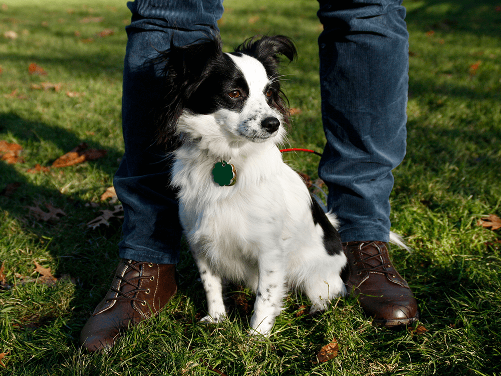 What should you do before a dog training session