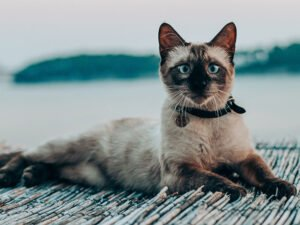 Cancer in Cats: Symptoms, Diagnosis, and Treatments