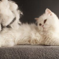 Cat Shedding: When Should You Worry?