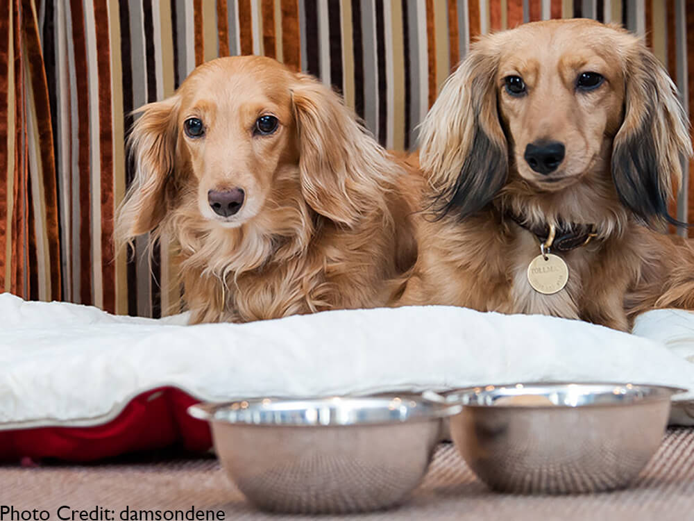 dog friendly hotels lake district