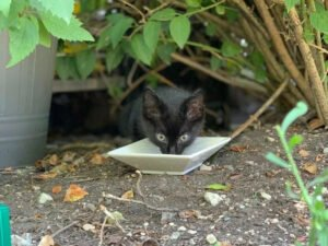 The Story of Smucci the Stray Black Kitten
