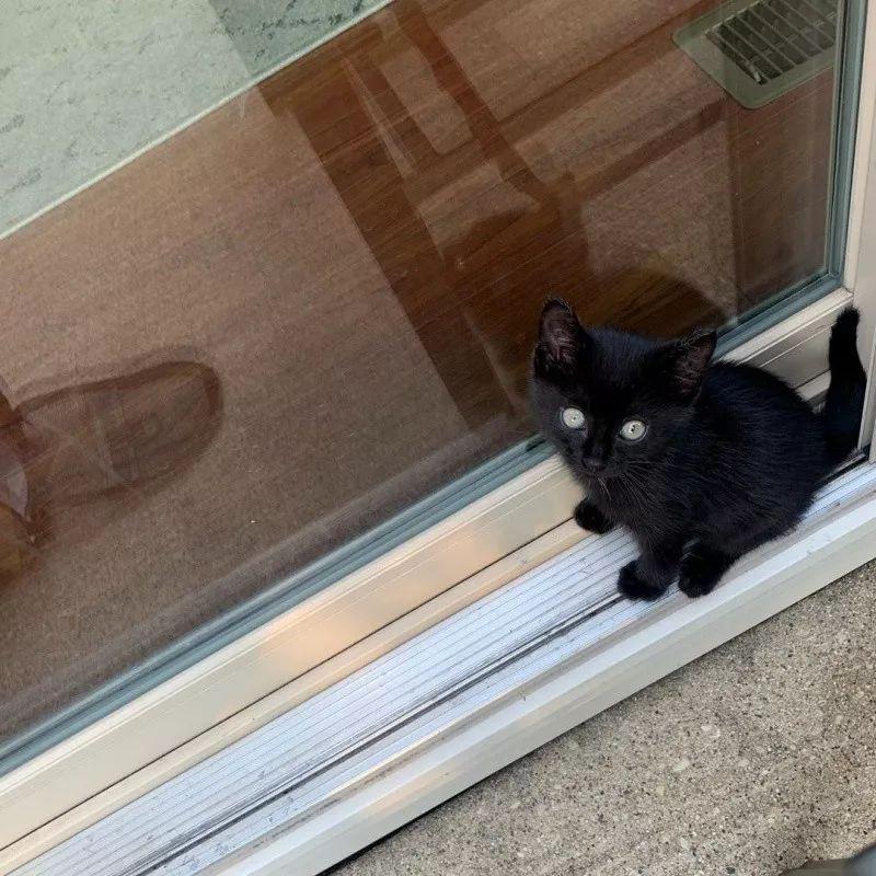 black kitten 5