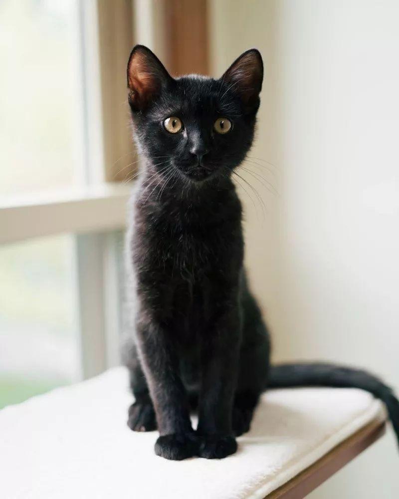 black kitten 6