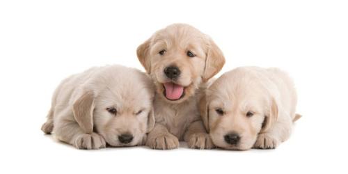 dog sizes